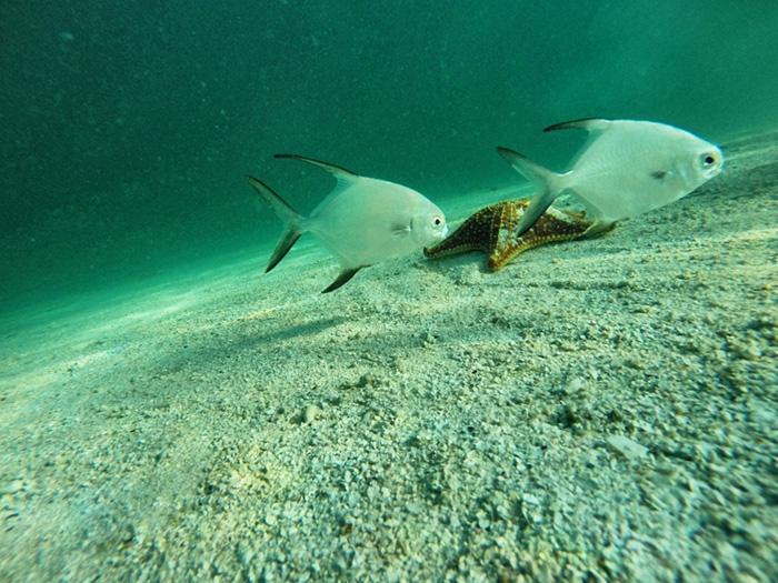 san-blas-inseln-fische