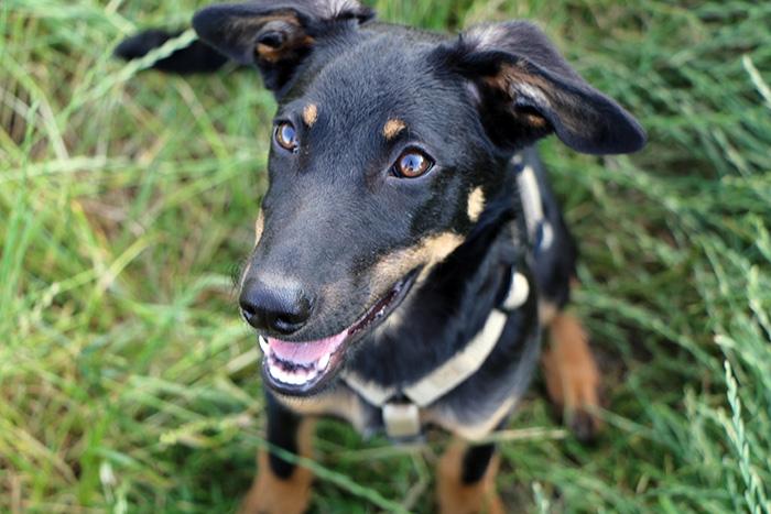 Hund in der Stadt-Soziale-Beduerfnisse