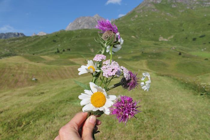 Alpenblumen Alp Flix