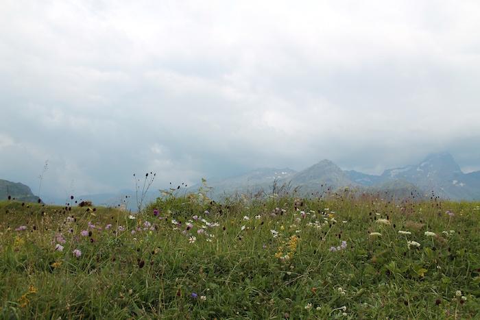 Nebel Alpwiese