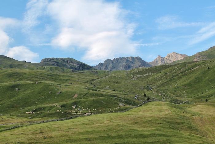 Schafherde Auf der Alp