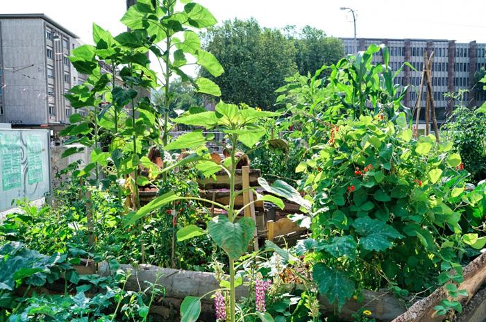 Urban-Gardening-Freiburg