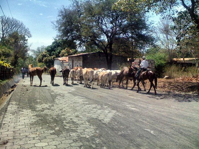 ometepe-pferde