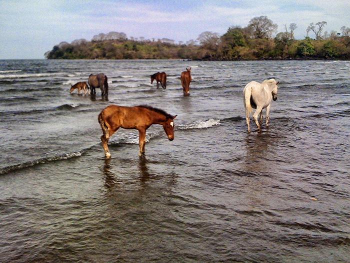 ometepe-pferde2