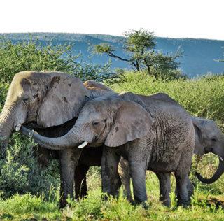 Wildlife Safari in Namibia – auf ins exotische Abenteuer!