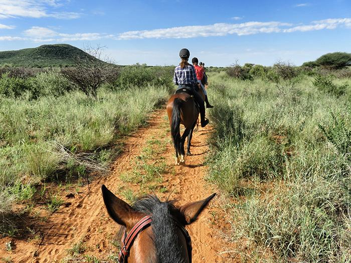 safari-2-auf-den-ruecken-der-pferde