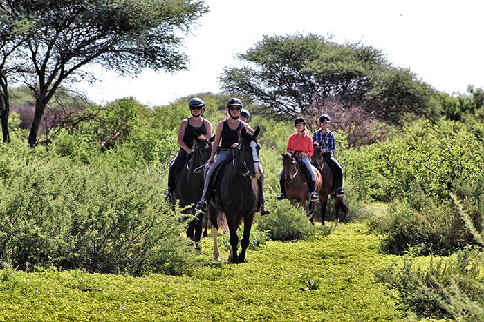 safari-2-manchmal-im-wahrsten-sinne-des-wortes-durch-den-busch