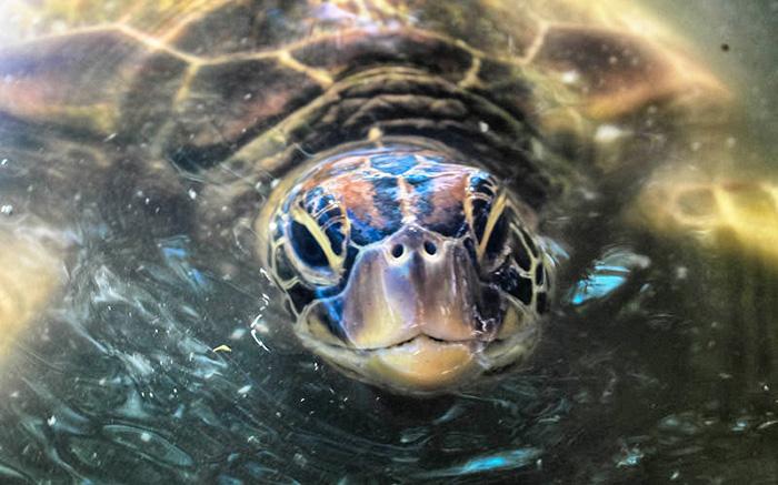 samoa-turtle-katharina