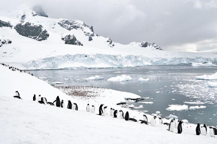 cuverville-antarktis