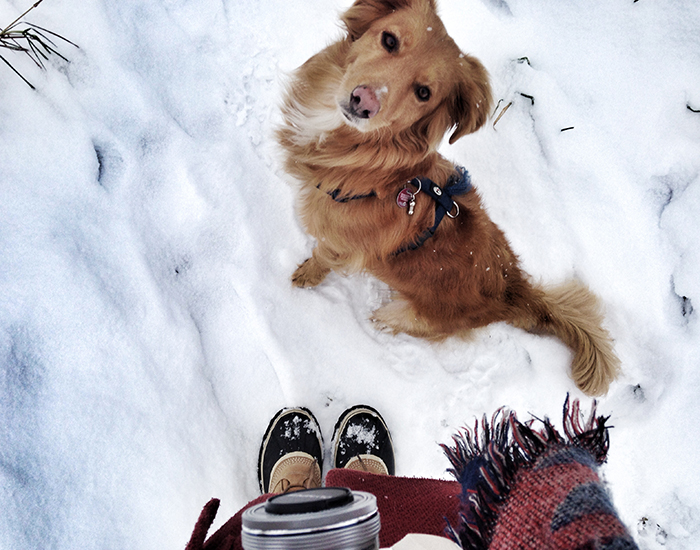 Fressnapf-Boris-Winterspaziergang