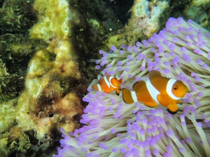 malaysia-urlaub-unterwasserwelt2