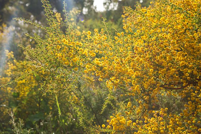 perth_kingspark_botanical_garden