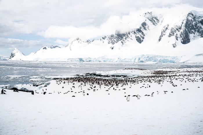 fotos der menschen in antarktis