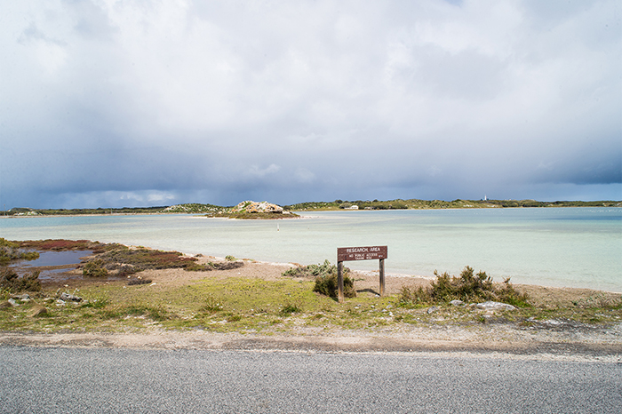rottnest_island2