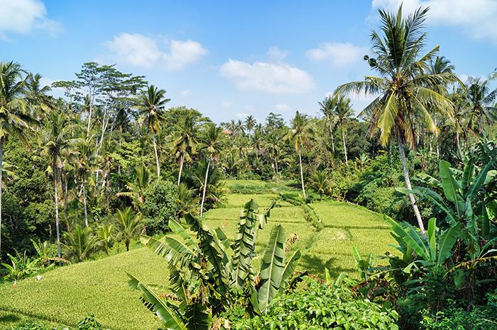 tegalalang-bali