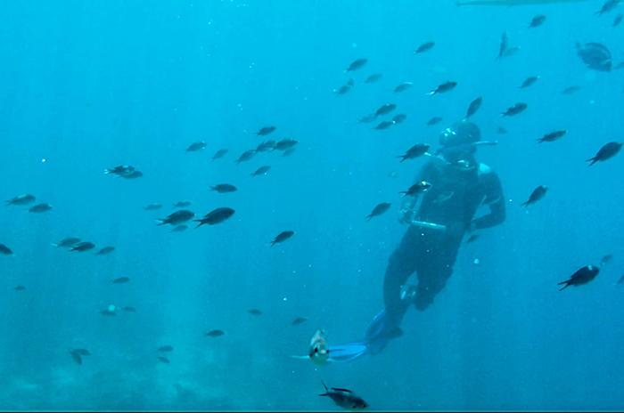 Curaçao-Aktiv-Urlaub-Schnorcheln