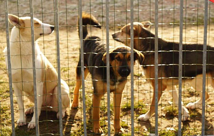 Tierheim_Prignitz_Hunde