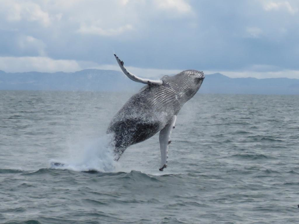 whale-watching-tour-from-reykjavik-0