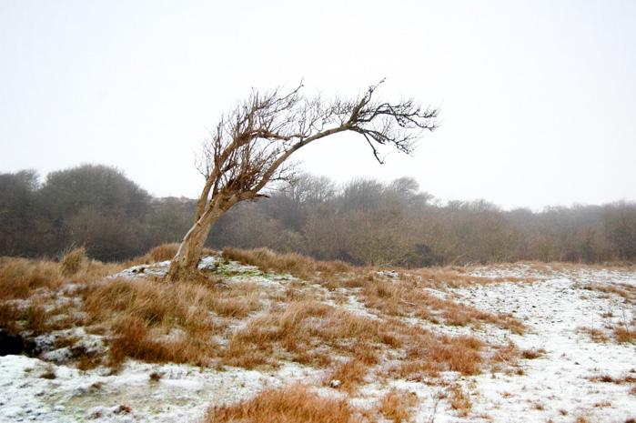Wandern auf Baltrum-verbogener Baum