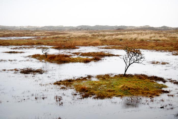 Wandern auf Baltrum-ueberflutete Wiesen