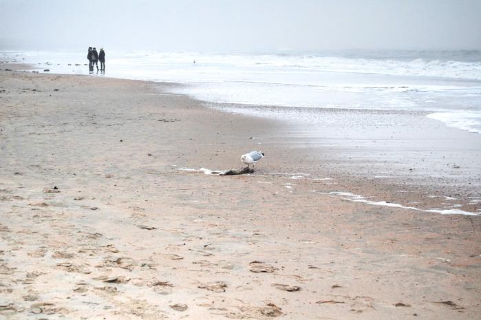 Wandern auf Baltrum-Strand mit Moewe