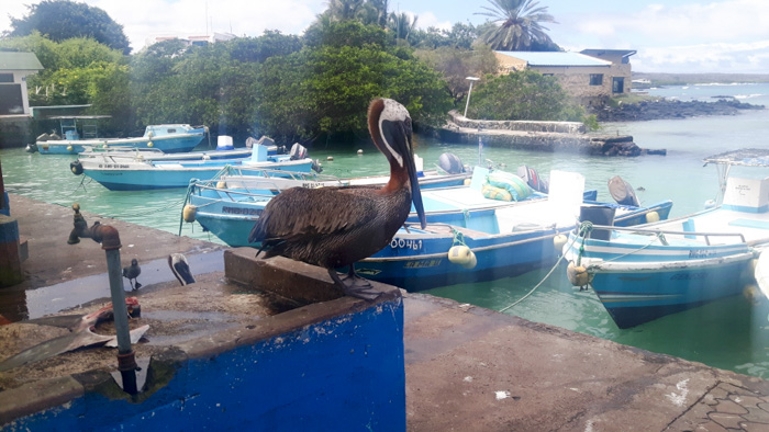 Galapagosinseln günstig bereisen-Vogel