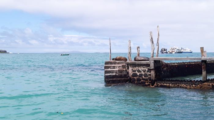 Galapagosinseln günstig bereisen-Hafen