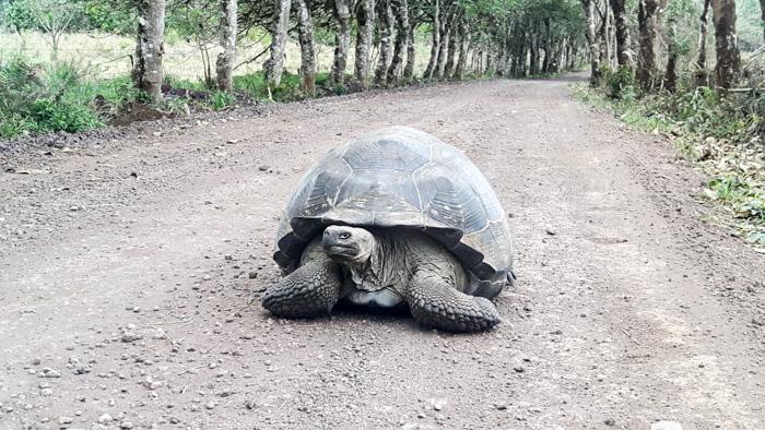 Galapagosinseln günstig bereisen-Schildkröte