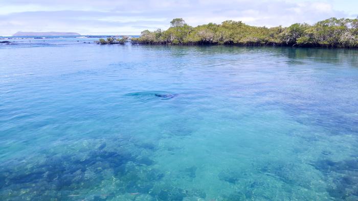 Galapagosinseln günstig bereisen-Meer