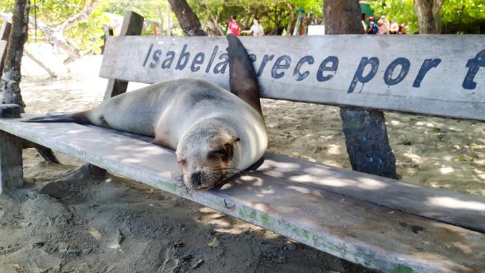 Galapagosinseln günstig bereisen-Seehung