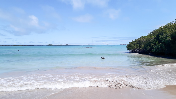 Galapagosinseln günstig bereisen-Traumstrand