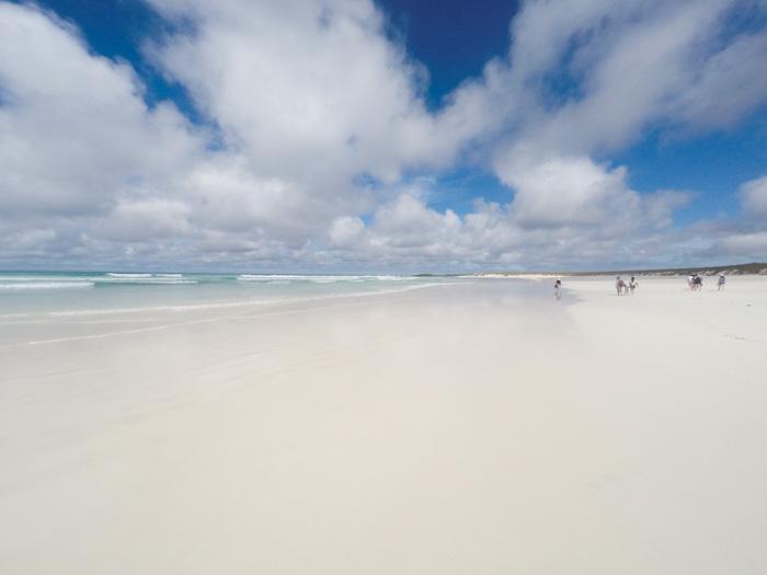 Galapagosinseln günstig bereisen
