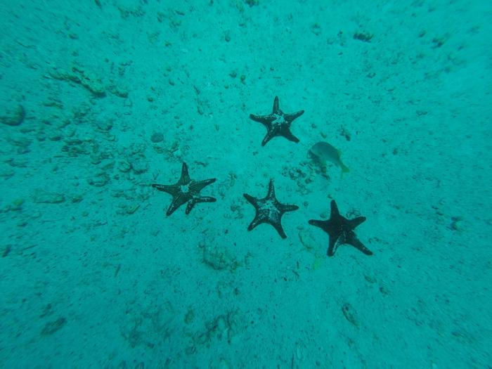 Galapagosinseln günstig bereisen-Seesterne