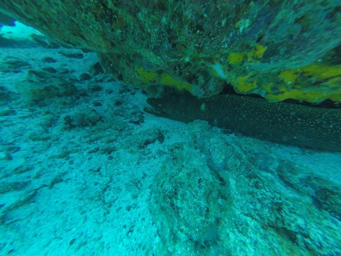 Galapagosinseln günstig bereisen-Moräne