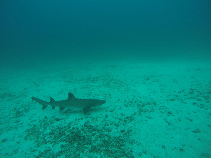 Galapagosinseln günstig bereisen-Hai