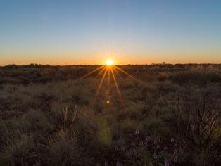 sonnenaufgang-outback-millstream