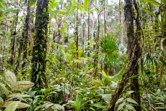 Blick in den Regenwald des Cuyabeno Reservat