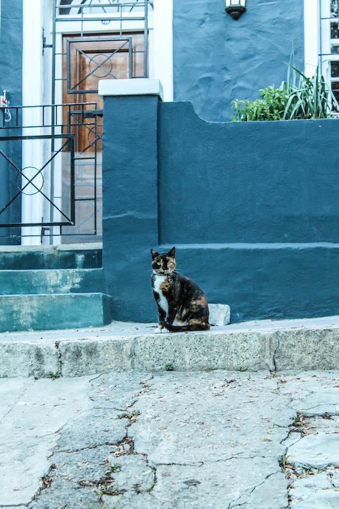 Im Stadtteil Waterkant fühlen sich nicht nur die Katzen wohl