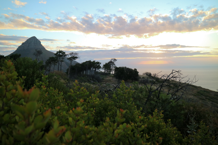 Lions Head Sundowner
