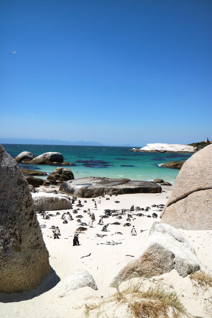 Boulders Beach Pinguine Simons Town
