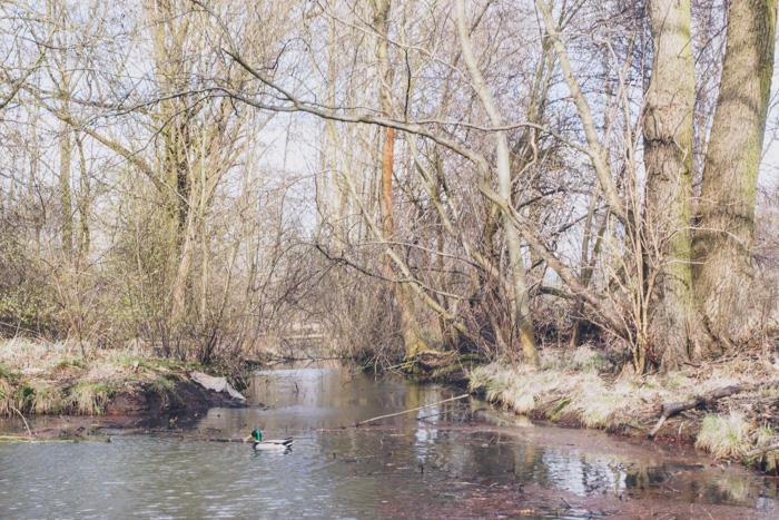 Spreewald Urwald