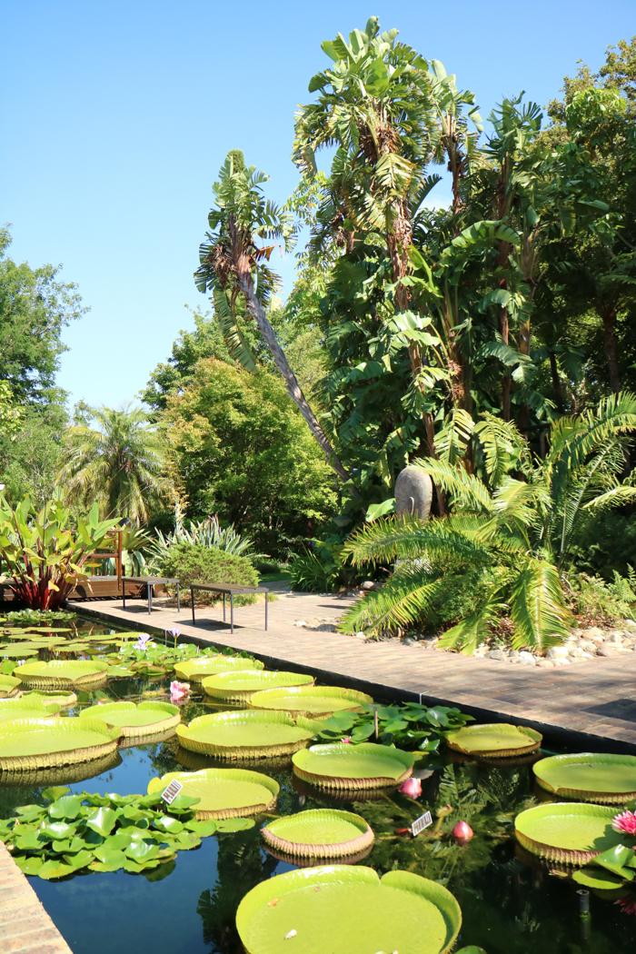 Botanischer Garten in Stellenbosch