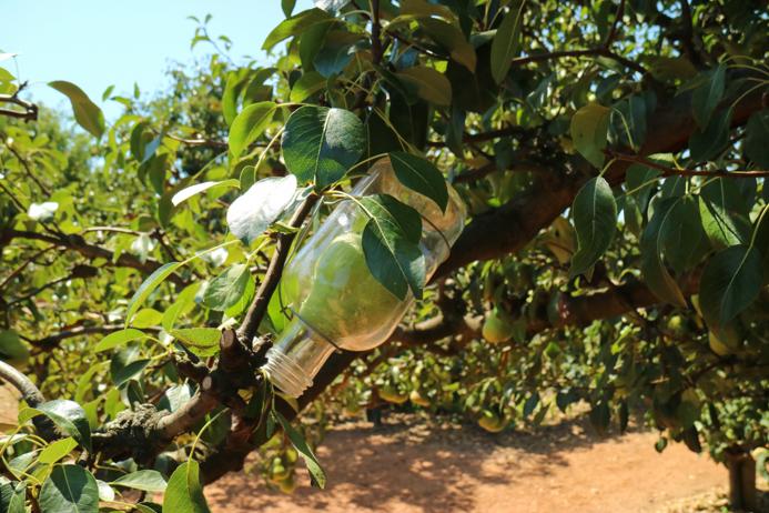 Auf dem Weingut Babylonstoren wird viel frisches Obst und Gemüse angebaut.