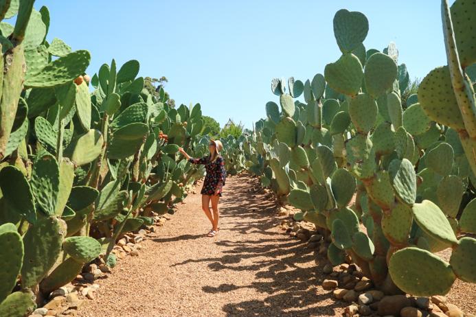 Der Traum für jedes Kaktusmädchen: Das Weingut Babylonstoren.
