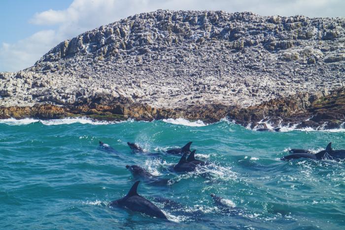 Dolphins Südafrika