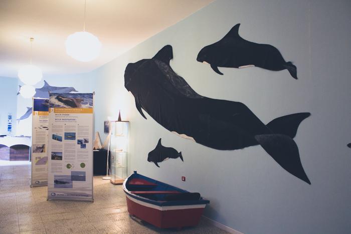 Die Ausstellung zum Thema Wale und Delfine auf La Gomera.