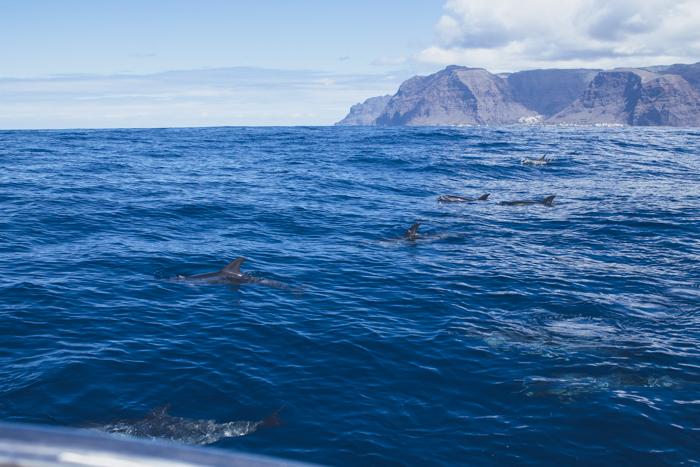 Whale Watching La Gomera