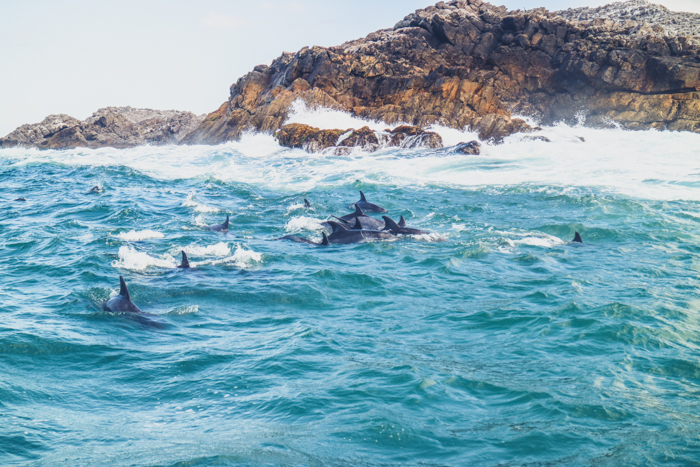 Delfine vor der Algoa Bay