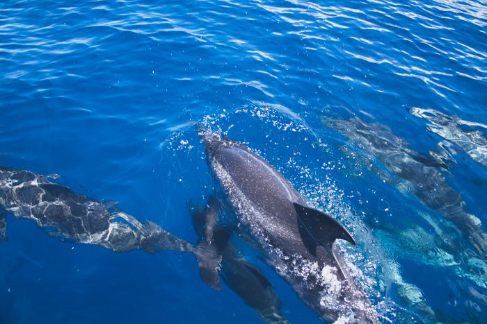 Delfine und Wale vor La Gomera.