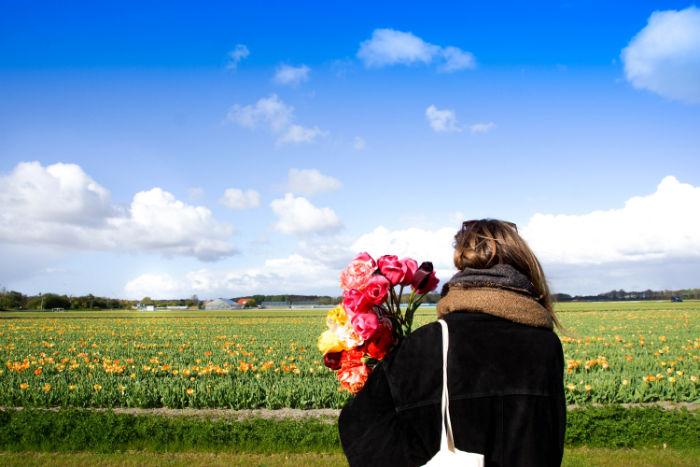Holland im Frühling - Blumenpracht